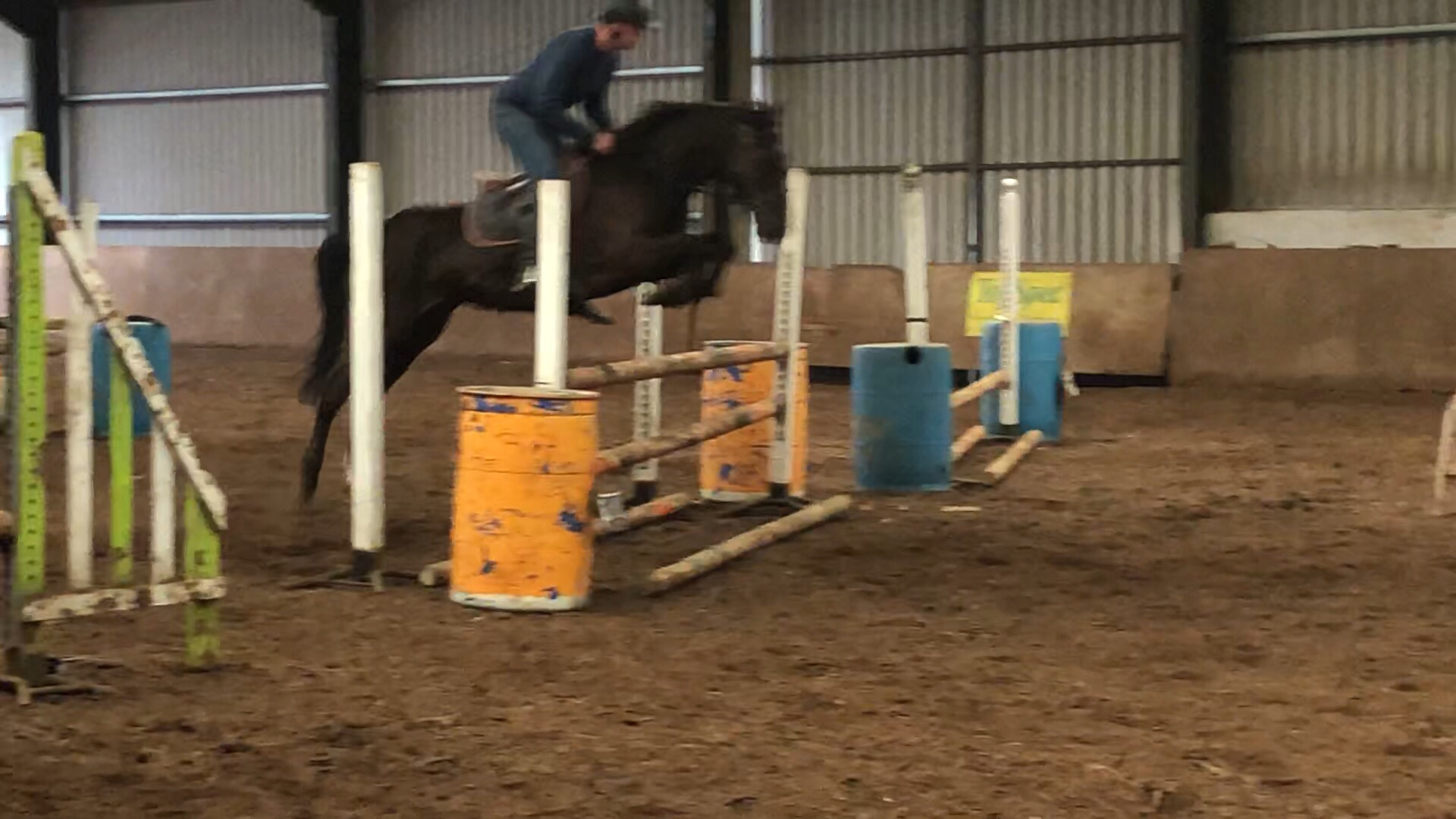 Mick jumping indoors