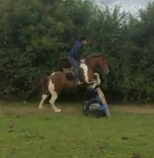 foxhall foursox  a skewbald pony jumping a cross country fence